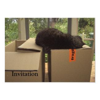 Cat 'Bram' sleeping on boxes Card