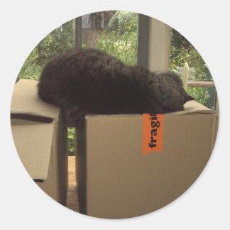 Cat 'Bram' sleeping on boxes Classic Round Sticker