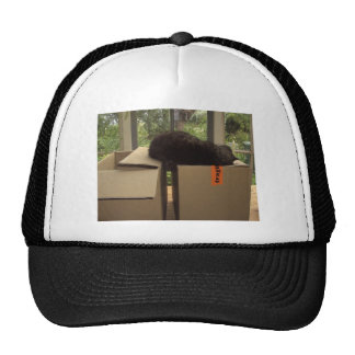 Cat Bram sleeping on boxes Trucker Hat