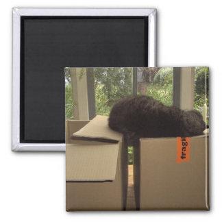 Cat 'Bram' sleeping on boxes Magnet