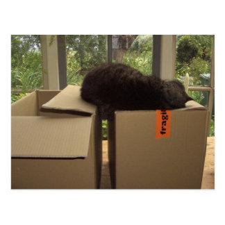 Cat 'Bram' sleeping on boxes Postcard