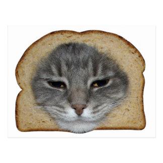 Cat Breader Postcard