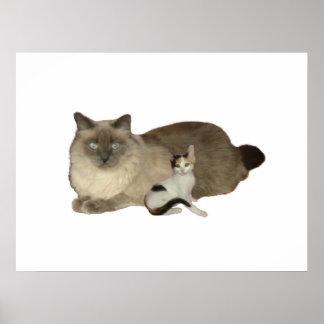 Cat Buddies Poster
