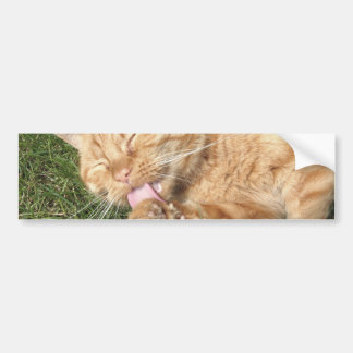 cat car bumper sticker