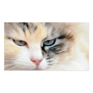 Cat Double-Sided Standard Business Cards (Pack Of 100)