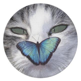 cat but plates