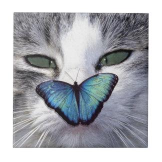 cat but tile
