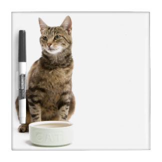Cat by bowl Dry-Erase board