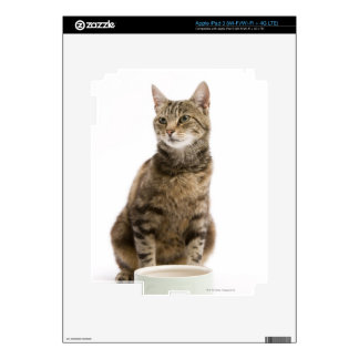 Cat by bowl skins for iPad 3