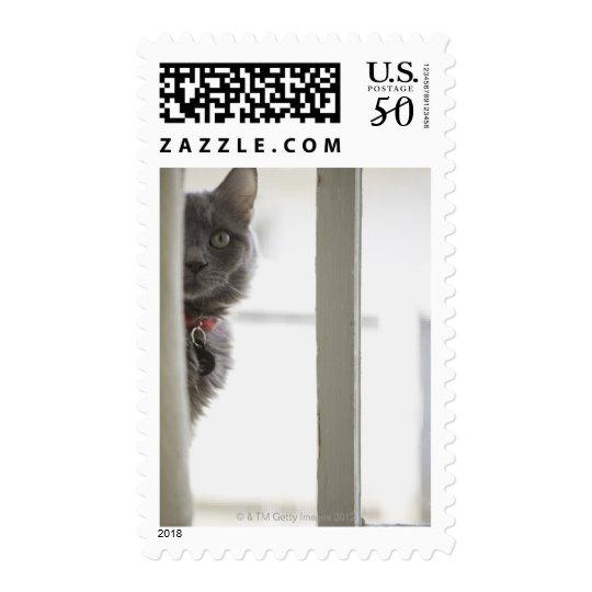 Cat by window postage