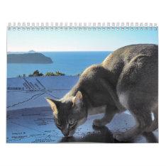 Cat Calendar at Zazzle