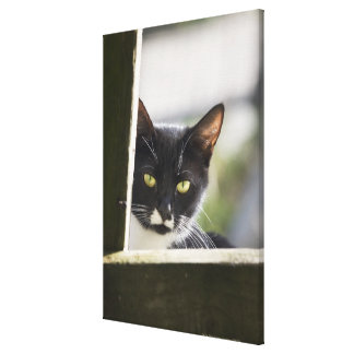 Cat Gallery Wrapped Canvas