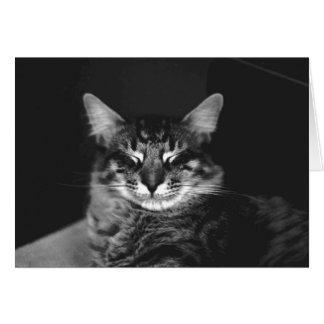 Cat Card #3