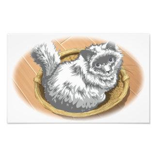 Cat Card Photograph