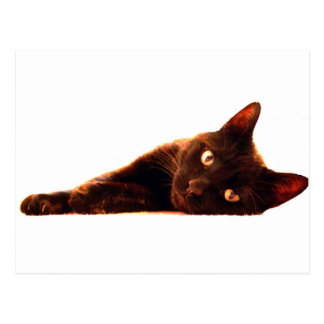Cat Card Postcard