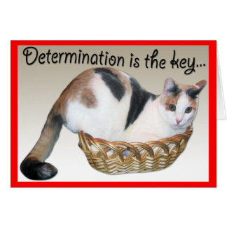 Cat Cards,Funny Encouragement to a Friend Card