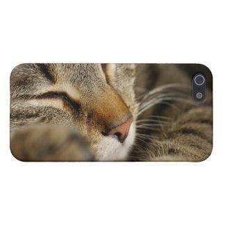 cat case for iPhone SE/5/5s