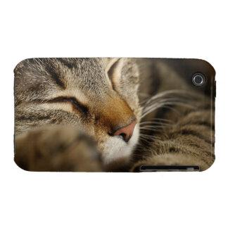 cat Case-Mate iPhone 3 case