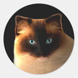 Cat Cats Ragdoll Ragdolls Kitty Stickers