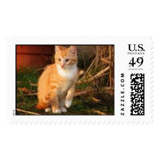 Cat Cats wild stripe print diy Anniversaries Postage