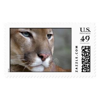 Cat Cats wild stripe print diy Anniversaries Postage Stamp