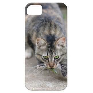 cat caught a lizard iPhone SE/5/5s case
