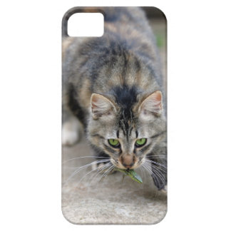cat caught a lizard iPhone SE/5/5s case