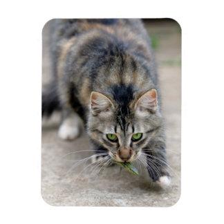 cat caught a lizard magnet