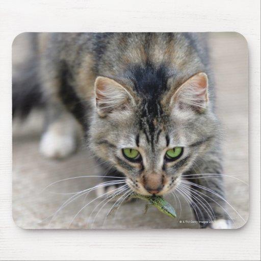 cat caught a lizard mousepad