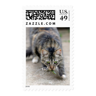 cat caught a lizard postage stamp
