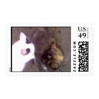 Cat Challenger Postage