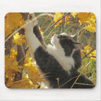 Cat Checking Out the Fall Colors Mouse Pad