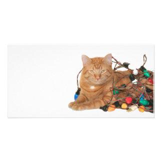 Cat Christmas light tangle Photo Card