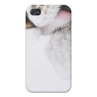 Cat cleaning paw, close-up cover for iPhone 4
