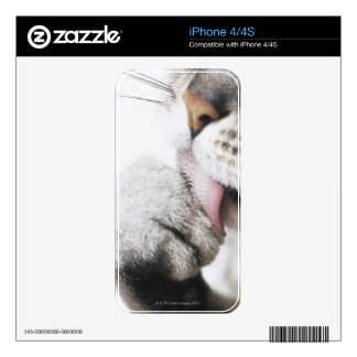 Cat cleaning paw decals for the iPhone 4S