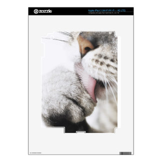 Cat cleaning paw iPad 3 decals