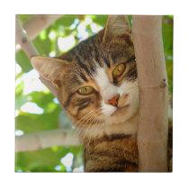 Cat Climbing a Tree Tile