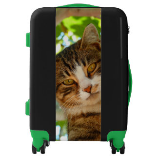 Cat Climbing Tree Luggage