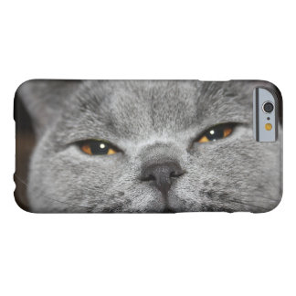 Cat Close-up Photo iPhone Case