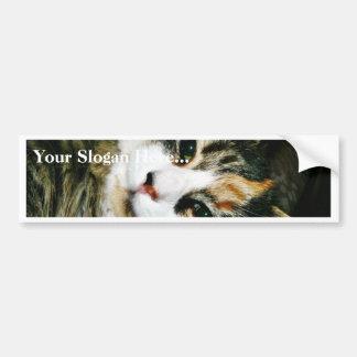 Cat Closeup Car Bumper Sticker
