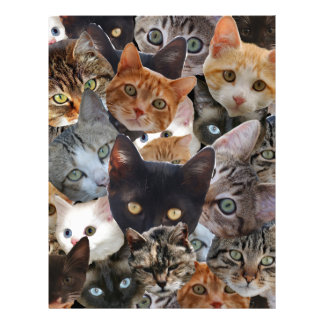 Cat Collage Letterhead