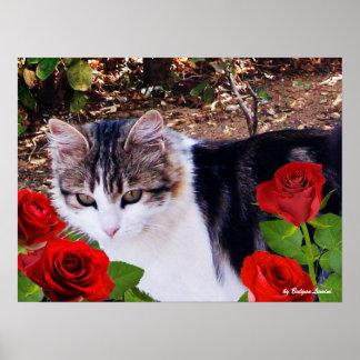 CAT CON LOS ROSAS ROJOS PÓSTER