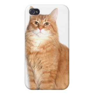 Cat Cover For iPhone 4