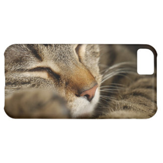 cat cover for iPhone 5C