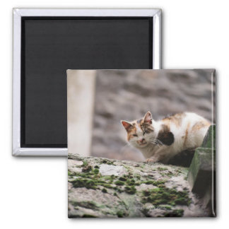 Cat crouching on rock wall 2 inch square magnet