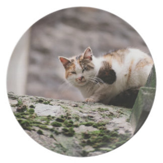 Cat crouching on rock wall dinner plate