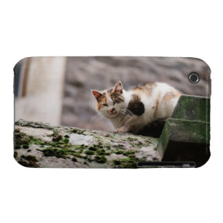 Cat crouching on rock wall iPhone 3 Case-Mate case