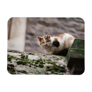 Cat crouching on rock wall magnet
