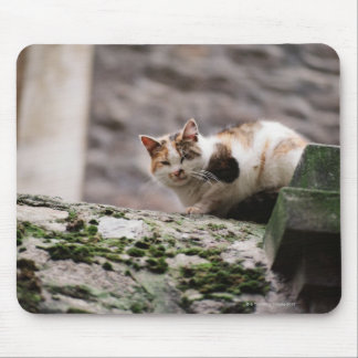 Cat crouching on rock wall mouse pad