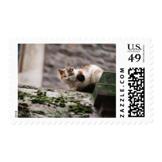 Cat crouching on rock wall postage stamp